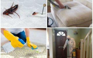 Эффективные средства для обработки квартиры от блох