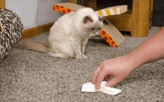 Как убрать запах кошачьей мочи с дивана, обуви, линолеума?