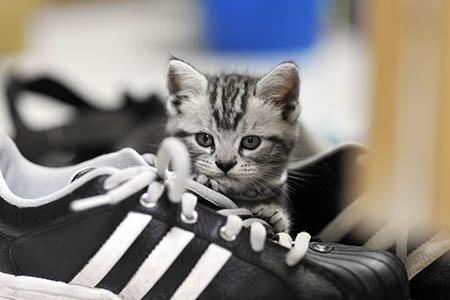 котенок на кроссовках