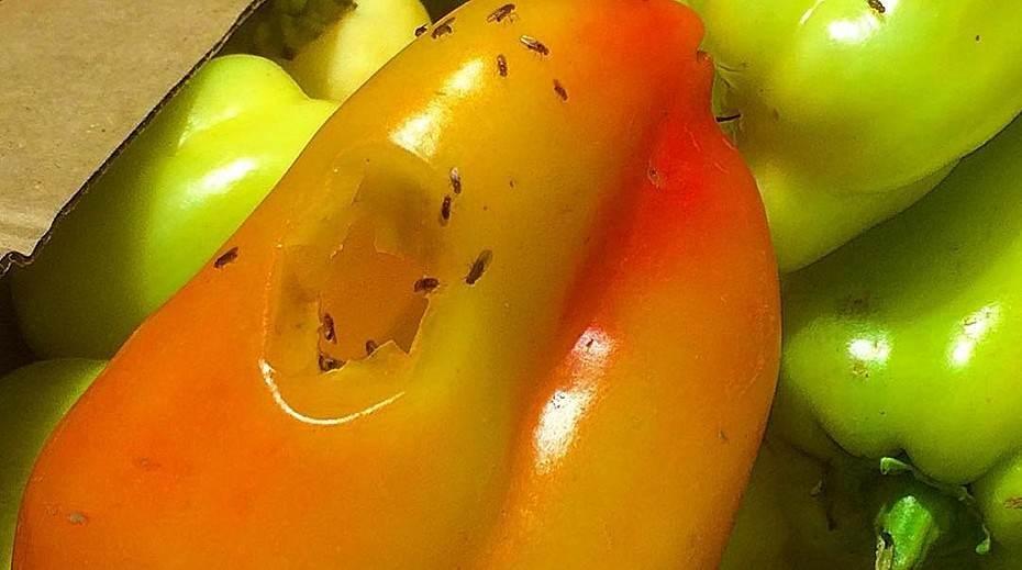 Мухи-дрозофилы на овощах